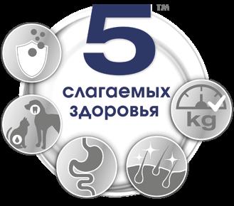 Logo total five