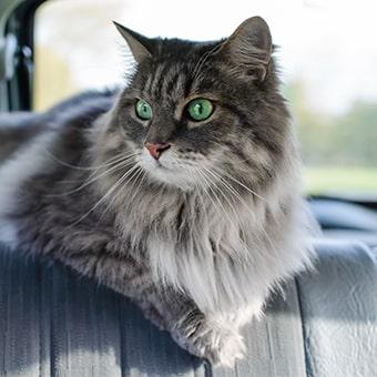 Как перевозить кошку в машине?