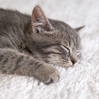 Сколько спят котята и от чего зависит их здоровый сон?