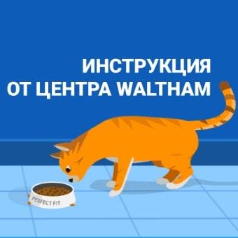 Как определить физическое состояние кошки? Инструкция от центра Waltham