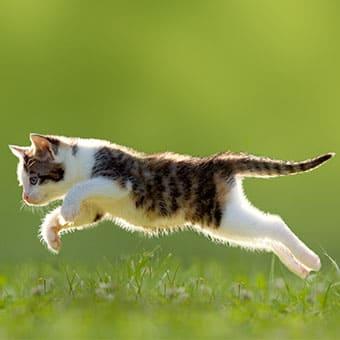 Позволять ли кошке гулять на улице или нет