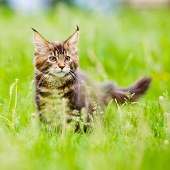Когда котёнок вырастает