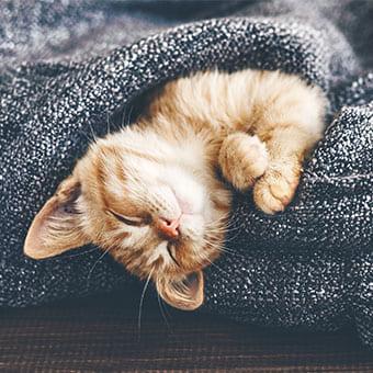 Как стимулировать активность кошки, живущей в доме
