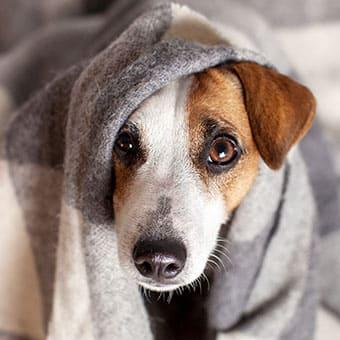 Когда в доме появляется собака