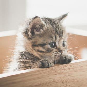 Польза смешанного кормления для вашей кошки