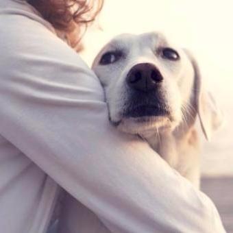 С собакой по жизни – в чём преимущества?