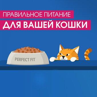 Правильное питание для вашей кошки