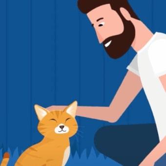 Как распознать эмоции кошки по языку тела