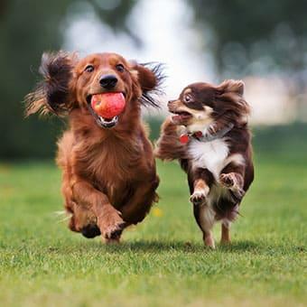 Игрушки и игры для собак: как сделать правильный выбор